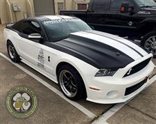 White_Mustang_2.jpg