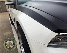 White_Mustang_3.jpg
