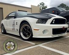 White_Mustang_6.jpg