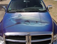 tx-sharkfishing3.jpg